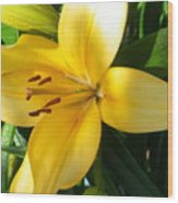 Beautiful Lily I Wood Print