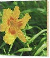 Beautiful Lily Wood Print