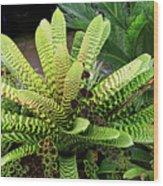 Beautiful Lime Bromeliad Wood Print