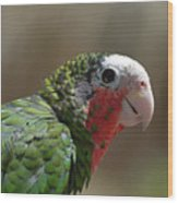 Beautiful Look At At The Profile Of A Conure Parrot Wood Print