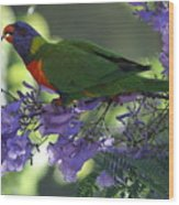 Beautiful Lorikeet Wood Print
