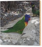 Beautiful Lorikeets Wood Print