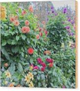 Beautiful Lot Of Dahlias,butchart Gardens,victoria,canada Wood Print