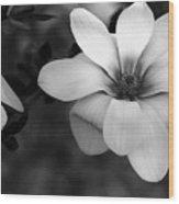 Beautiful Magnolia Wood Print