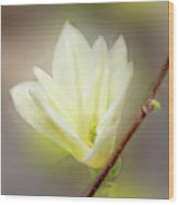 Beautiful Magnolia Original Painting 01 By H G Mielke Wood Print