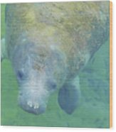 Beautiful Manatee Wood Print