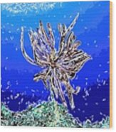 Beautiful Marine Plants 1 Wood Print by Lanjee Chee