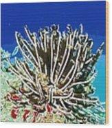 Beautiful Marine Plants 11 Wood Print by Lanjee Chee