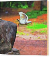 Beautiful Moment With A Bird Take Off , Wall Frame, Art Wood Print
