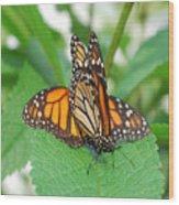 Beautiful Monarchs Wood Print