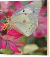 Beautiful Moth Wood Print