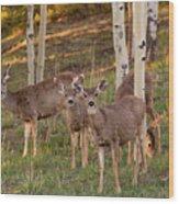 Beautiful Mule Deer Herd Wood Print