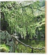 Beautiful Nature Wood Print