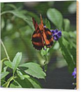 Beautiful Oak Tiger Butterfly On Purple Flowers Wood Print