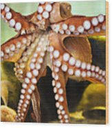 Beautiful Octopus Wood Print by Marilyn Hunt