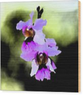 Beautiful Orchid Wood Print