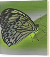 Beautiful Paper Kite Butterfly On A Green Leaf Wood Print