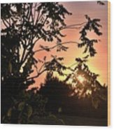 Beautiful Park Sunset View Trees Wood Print