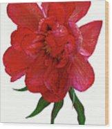 Beautiful Peony Flower. Wood Print