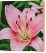 Beautiful Pink Lily Wood Print