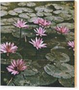 Beautiful Pink Lotus Water Lilies Bloom Wood Print