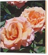 Beautiful Pink Orange Rose Flowers Garden Baslee Troutman  Wood Print