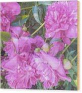 Beautiful Pink Peonies Wood Print