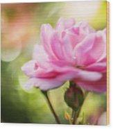 Beautiful Pink Rose Blooming In Garden With Natural Bokeh Wood Print