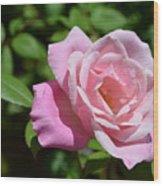 Beautiful Pink Rose Wood Print