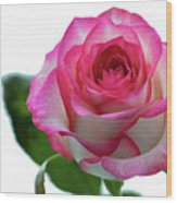 Beautiful Pink Rose With Leaves On A Wite Background. Wood Print