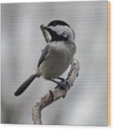 Beautiful Pose - Black-capped Chickadee Wood Print