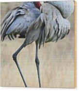 Beautiful Preening Sandhill Crane Wood Print