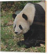 Beautiful Profile Of A Giant Panda Bear Ambling Along Wood Print