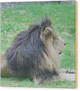 Beautiful Profile Of A Resting Lion In Green Grass Wood Print