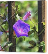 Beautiful Railroad Vine Flower II  Wood Print