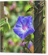 Beautiful Railroad Vine Flower Wood Print