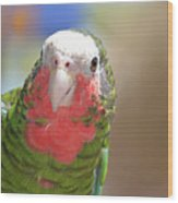 Beautiful Red Feathers On The Throat Of A Green Conure Bird Wood Print