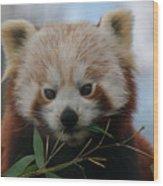 Beautiful Red Panda Wood Print