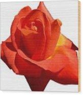Beautiful Red Rose Photograph Vector Wood Print