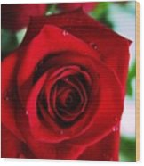 Beautiful Red Rose Abstract 3 Wood Print