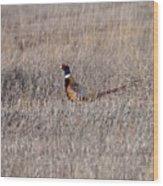 Beautiful Rooster Pheasant  Wood Print