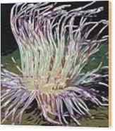 Beautiful Sea Anemone 1 Wood Print