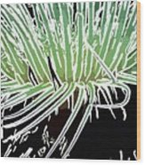 Beautiful Sea Anemone 3 Wood Print