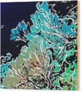 Beautiful Sea Fan Coral 1 Wood Print by Lanjee Chee