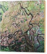 Beautiful Japanese Garden,butchart Gardens,victoria,canada 3. Wood Print
