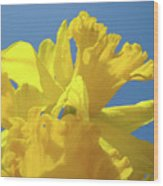 Beautiful Spring Daffodil Bouquet Flowers Blue Sky Art Prints Baslee Troutman Wood Print