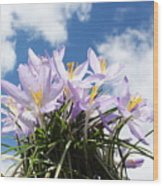 Beautiful Spring Flower Blossom In Sky Background Wood Print