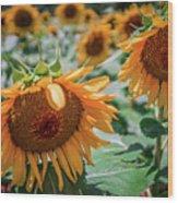 Beautiful Sunflower Field In South Carolina Wood Print