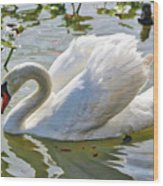 Beautiful Swan Wood Print