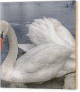 Beautiful Swans Wood Print